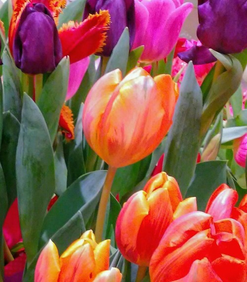 tulip-bouquet